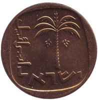 Пальма. Монета 10 агор. 1967 год, Израиль. UNC.