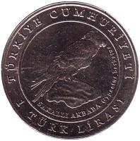 Орел. Фауна Турции. Монета 1 лира, 2009 год, Турция.