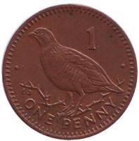 Берберская куропатка. Монета 1 пенни, 1995 год, Гибралтар. (AB). Магнитная.