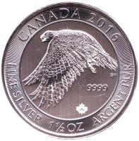 Сокол. Монета 8 долларов. 2016 год, Канада.