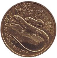 Зеленая ящерица. Монета 2 злотых, 2009 год, Польша.