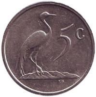 Африканская красавка. Монета 5 центов. 1988 год, Южная Африка.