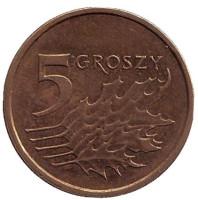 Дубовые листья. Монета 5 грошей. 2013 год, Польша. (Старый тип).