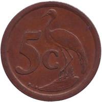 Африканская красавка. Монета 5 центов. 1993 год, Южная Африка.