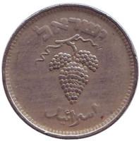 Гроздь винограда. Монета 25 прут. 1949 год, Израиль. (без точки).