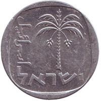 Пальма. Монета 10 агор. 1978 год, Израиль. (Вар. II).