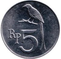Чёрный дронго. Монета 5 рупий. 1970 год, Индонезия. UNC.