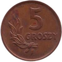 Монета 5 грошей. 1949 год, Польша. (бронза).