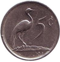 Африканская красавка. Монета 5 центов. 1977 год, Южная Африка.