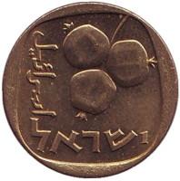 Гранат. Монета 5 агор. 1969 год, Израиль. UNC.