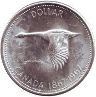 Гусь. 100 лет Конфедерации. Монета 1 доллар. 1967 год, Канада.