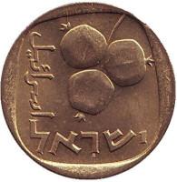 Гранат. Монета 5 агор. 1970 год, Израиль. UNC.