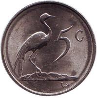 Африканская красавка. Монета 5 центов. 1980 год, Южная Африка. aUNC.