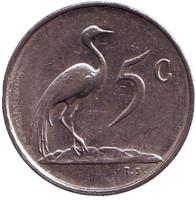 Африканская красавка. Монета 5 центов. 1981 год, Южная Африка.