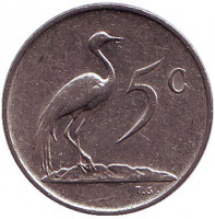 Африканская красавка. Монета 5 центов. 1983 год, Южная Африка.