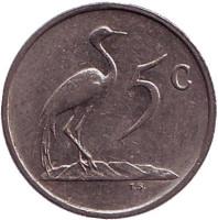 Африканская красавка. Монета 5 центов. 1985 год, Южная Африка.