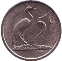 Африканская красавка. Монета 5 центов. 1986 год, Южная Африка.