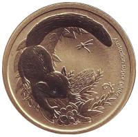 """Сахарная летяга. Серия """"Детёныши диких животных"""". Монета 1 доллар. 2011 год, Австралия."""