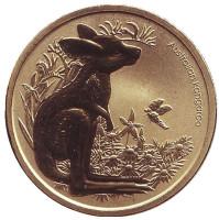 """Кенгуру. Серия """"Детёныши диких животных"""". Монета 1 доллар. 2011 год, Австралия."""