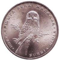 Ястребиная сова. Монета 50 тенге, 2011 год, Казахстан. (зеркальный аверс)