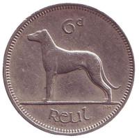 Ирландский волкодав. Монета 6 пенсов. 1961 год, Ирландия.