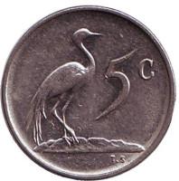 Африканская красавка. Монета 5 центов. 1972 год, Южная Африка.