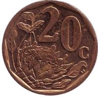 Цветок протея. Монета 20 центов. 2010 год, ЮАР.
