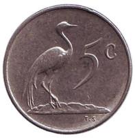 Африканская красавка. Монета 5 центов. 1975 год, Южная Африка.