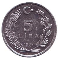 Монета 5 лир. 1987 год, Турция.