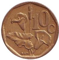 Лилия. Монета 10 центов. 1993 год, Южная Африка.