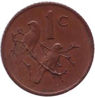 Воробьи. Монета 1 цент. 1970 год, ЮАР.