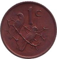 Воробьи. Монета 1 цент. 1971 год, ЮАР.