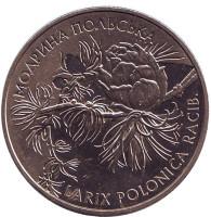 Модрина польская. Монета 2 гривны. 2001 год, Украина.