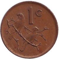 Воробьи. Монета 1 цент. 1984 год, ЮАР.