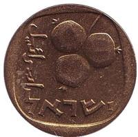 Гранат. Монета 5 агор. 1966 год, Израиль. UNC.