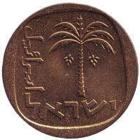 Пальма. Монета 10 агор. 1966 год, Израиль. UNC.