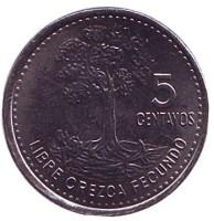 Хлопковое дерево. Монета 5 сентаво, 2014 год, Гватемала.
