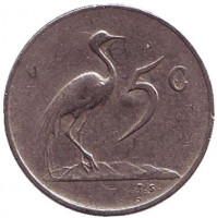 Африканская красавка. Монета 5 центов. 1965 год, Южная Африка. (South Africa). Из обращения.