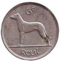 Ирландский волкодав. Монета 6 пенсов. 1935 год, Ирландия.