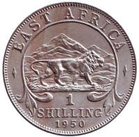 Лев. Монета 1 шиллинг. 1950 год, Восточная Африка. (Без отметки монетного двора)