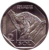 Очковый медведь. Фауна Перу. Монета 1 соль. 2017 год, Перу.