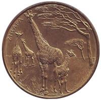 Жирафы. Зоопарк г. Брно. Сувенирный жетон, Чехия.