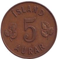 Монета 5 аураров. 1963 год, Исландия.