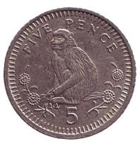 Варварийская обезьяна. Монета 5 пенсов. 1994 год, Гибралтар.
