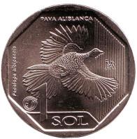 Белокрылая пенелопа. Монета 1 соль. 2018 год, Перу.