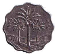 Пальмовые деревья. Монета 10 филсов. 1975 год, Ирак.