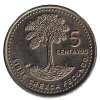 Хлопковое дерево. Монета 5 сентаво. 1985 год, Гватемала.
