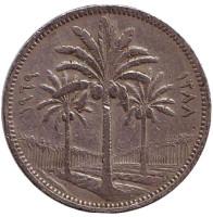 Пальмовые деревья. Монета 50 филсов. 1969 год. Ирак.