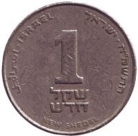 Монета 1 новый шекель. 1988 год, Израиль.