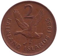 Магелланов гусь. Монета 2 пенса. 1985 год, Фолклендские острова.